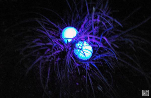Mysteriös: das Licht der Nite-Hawk Lampe macht die im Gras verborgenen Bälle gut sichtbar